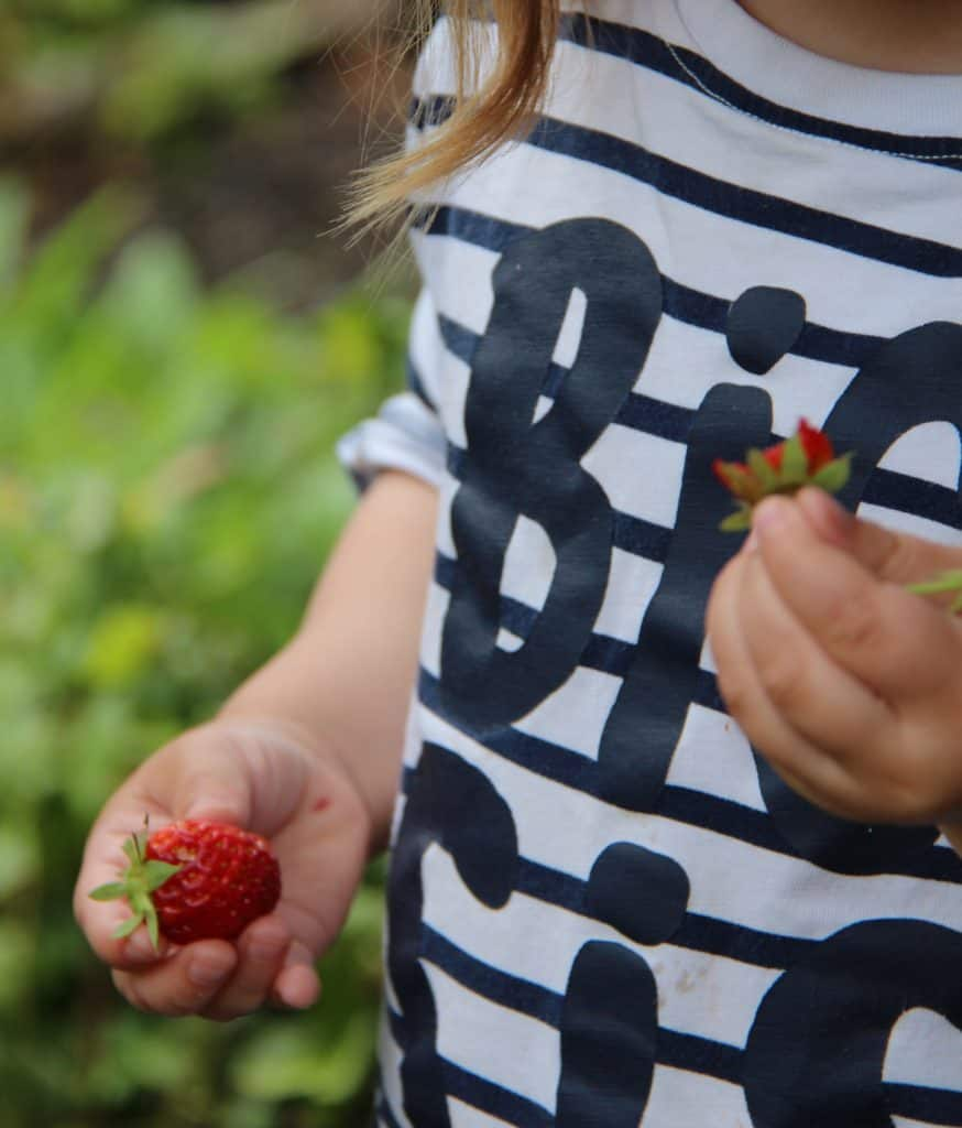 Growing a Strawberry Garden with Children