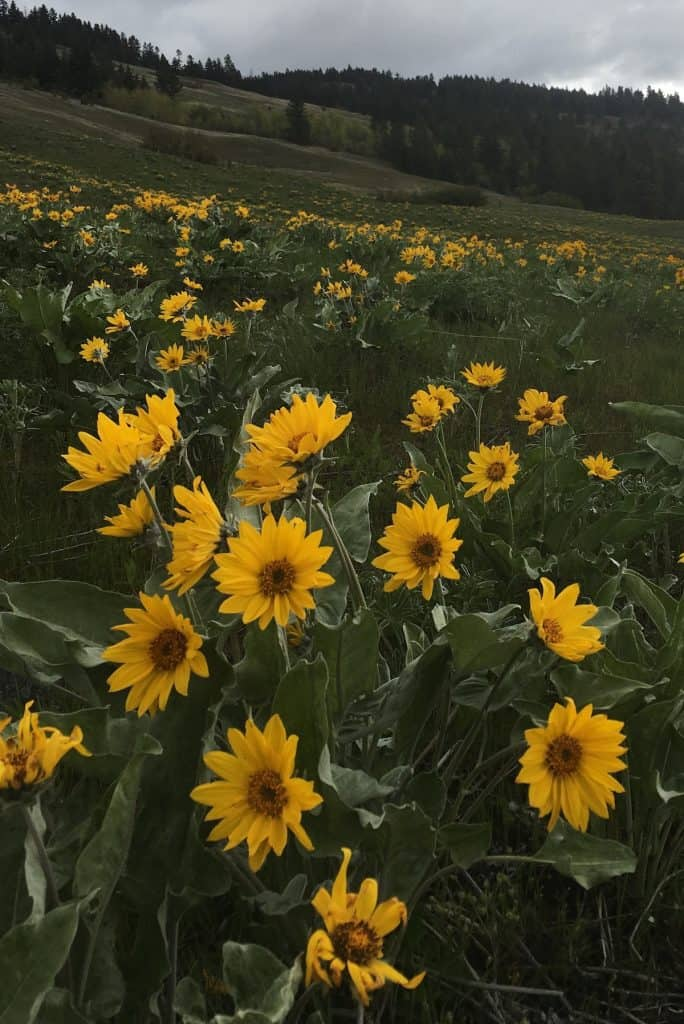 Wilderness and Wildflowers in the Okanagan Valley