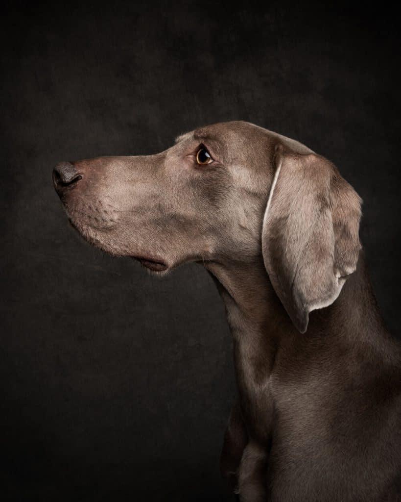 Vancouver Dog Photographer List - photo of dog (portrait-style)
